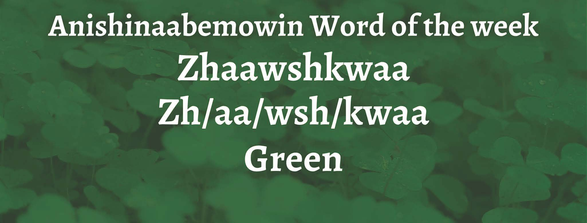 Anishinaabemowin Word of the week Zhaawshkwaa Green